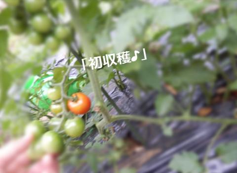 20150611a2.jpg