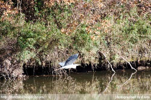 千葉県 長生郡 長柄町 生命の森リゾート かわせみ池 カワセミやアオサギなど野鳥の写真が撮れる池01