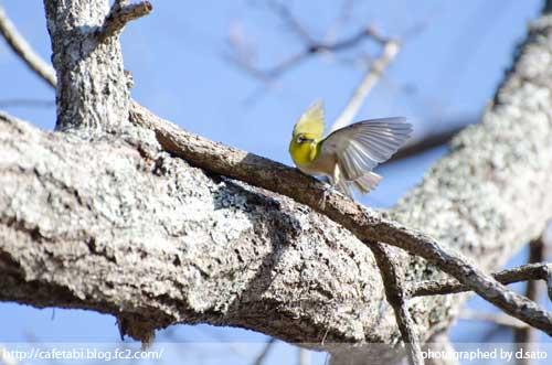 千葉県 長生郡 長柄町 生命の森リゾート かわせみ池 カワセミやアオサギなど野鳥の写真が撮れる池10