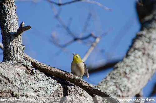 千葉県 長生郡 長柄町 生命の森リゾート かわせみ池 カワセミやアオサギなど野鳥の写真が撮れる池11