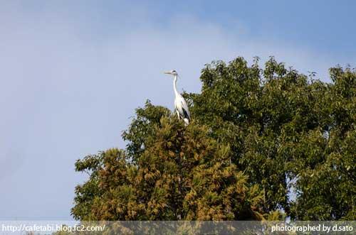 千葉県 長生郡 長柄町 生命の森リゾート かわせみ池 カワセミやアオサギなど野鳥の写真が撮れる池12