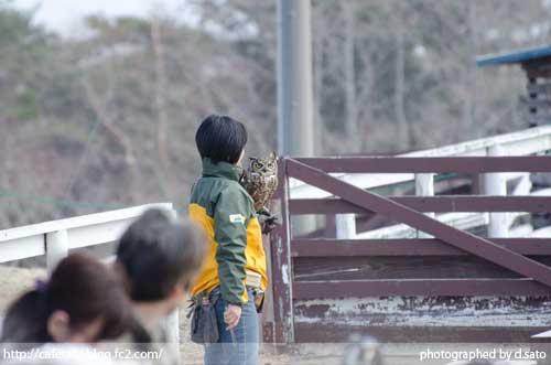 栃木県 那須郡 那須どうぶつ王国 バードパフォーマンスショー 口コミ 美女と猛禽 観光ガイド 11