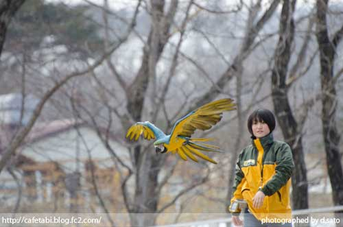 栃木県 那須郡 那須どうぶつ王国 バードパフォーマンスショー 口コミ 美女と猛禽 観光ガイド 16