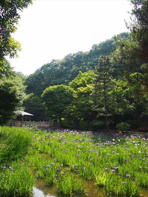 ばら苑2015年5月ゆうブログケロブログ (10)_R