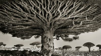 150115_ancient-tree-photography-1038x576.jpg