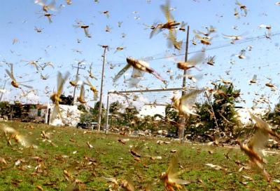 locust-swarm-russia-2.jpg