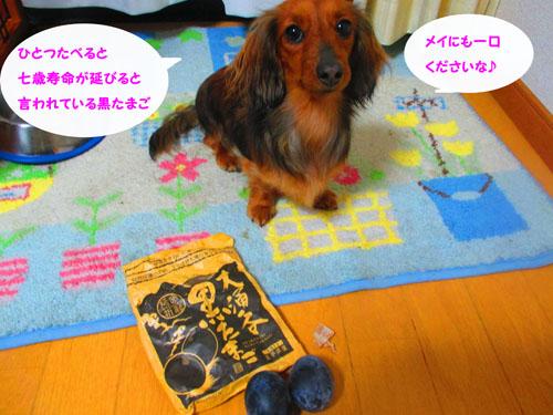 2015-03-hakone83.jpg