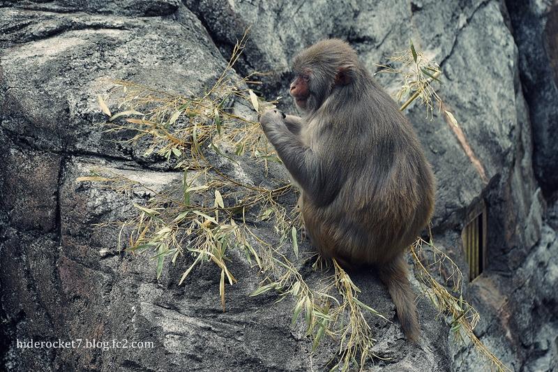 monkey_2015_01.jpg