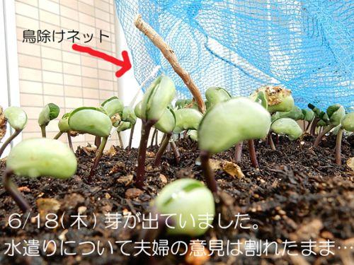 20150629 戸田川 枝豆2