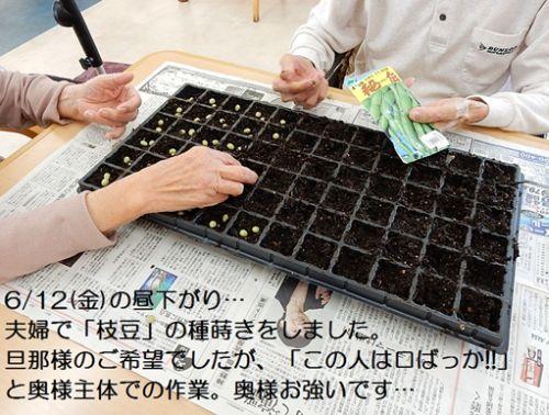 20150629 戸田川 枝豆1