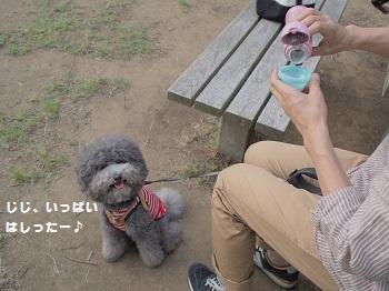 公園20150531-8