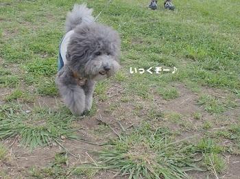 川さんぽ20150607-2