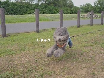 川さんぽ20150607-9