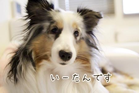いーたんのブログ