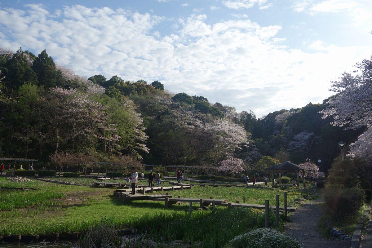蓮花寺公園12