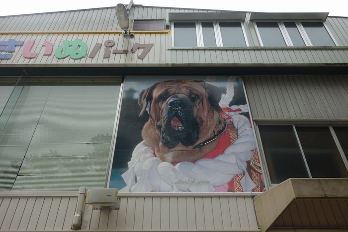 高知闘犬2