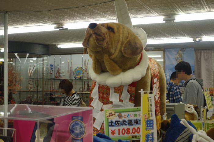 高知闘犬4