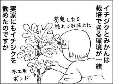 kfc00335-7.jpg