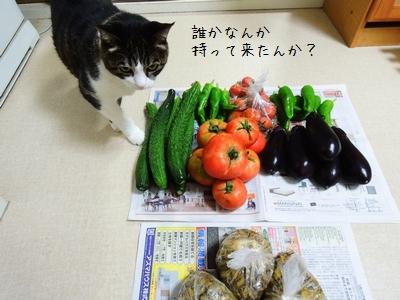 やじ猫銀①