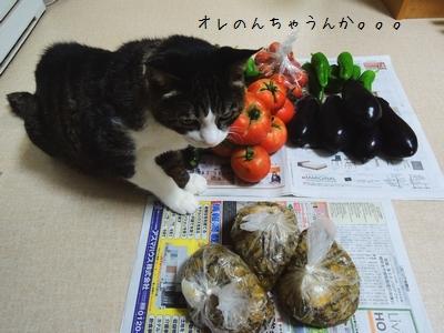 やじ猫銀③