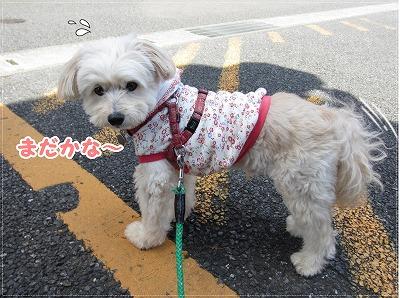 お散歩日和3