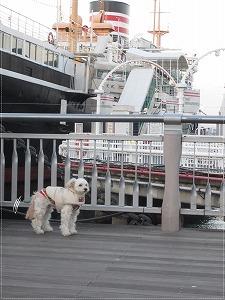 初めての横浜9
