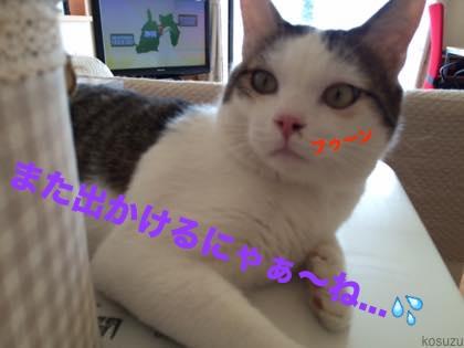 2015060210132041c.jpg
