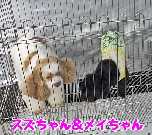 すずちゃん&メイちゃん