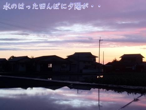 田んぼに夕陽が