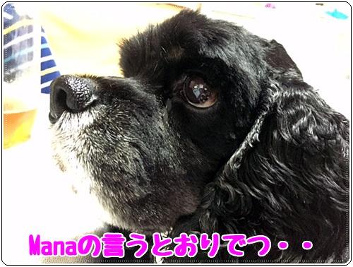 Manaの言うとおり