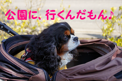 20150327184516f10.png