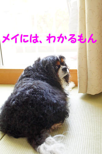 20150520152759a37.png