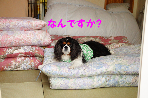 201505261402083a4.png