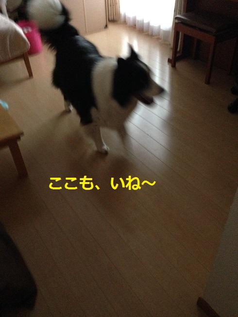 IMG_0899.jpg