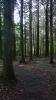 20150517原生の森53