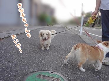 kinako2639.jpg