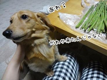 kinako2651.jpg