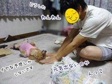 kinako2677.jpg