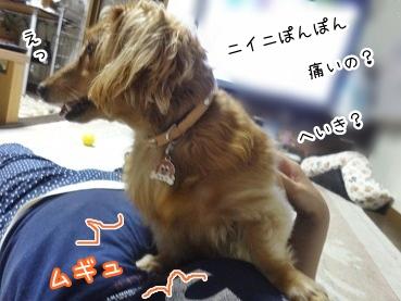 kinako2730.jpg