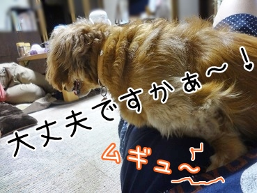 kinako2731.jpg