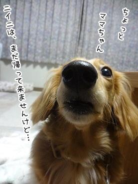 kinako2740.jpg
