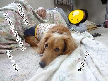 kinako2759.jpg