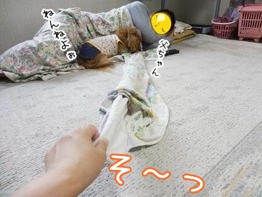 kinako2760.jpg