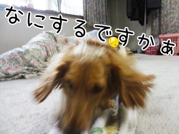 kinako2761.jpg