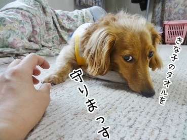 kinako2765.jpg