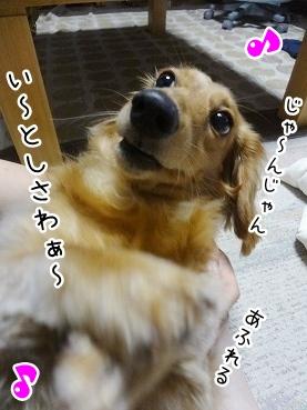 kinako2782.jpg