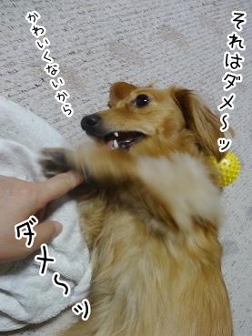 kinako2786.jpg