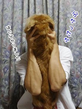 kinako2788.jpg