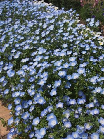 あしかがフラワーパークの花壇