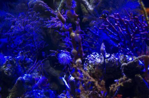 【海底】 宇宙より深海に行くほうが難しいという事実